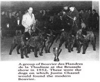 www.bouviersdesflandres-chiots.com